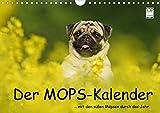 Der MOPS-Kalender (Wandkalender 2021 DIN A4 quer)