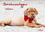 Bordeauxdoggen Welpen (Wandkalender 2021 DIN A4 quer)