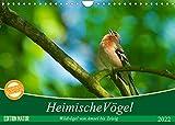 Heimische Vögel (Wandkalender 2022 DIN A4 quer)