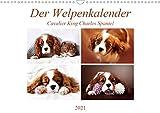 Der Welpenkalender - Cavalier King Charles Spaniel (Wandkalender 2021 DIN A3 quer)