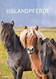 Islandpferde 2021 - Bild-Kalender A3 (29,7x42 cm) - Icelandic Horses - Tier-Kalender - Wandplaner - Alpha Edition