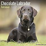 Chocolate Labrador Retriever - Brauner Labrador 2022 - 16-Monatskalender: Original Avonside-Kalender [Mehrsprachig] [Kalender]: Original BrownTrout-Kalender [Mehrsprachig] [Kalender] (Wall-Kalender)