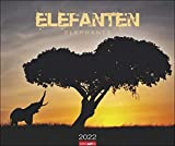 Elefanten Kalender 2022 - Tierkalender - Wandkalender mit internationalem Monatskalendarium - 12 Farbfotos - 55 x 46 cm