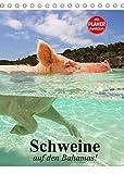 Schweine auf den Bahamas! (Tischkalender 2022 DIN A5 hoch)