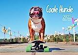 Edition Seidel Coole Hunde Premium Kalender 2022 DIN A3 Wandkalender Hundekalender lustige Sprüche Motivation