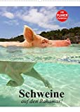 Schweine auf den Bahamas! (Wandkalender 2022 DIN A2 hoch)