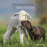 Tierfreundschaften 2021 - Broschürenkalender 30x30 cm (30x60 geöffnet) - Animal Friendships - Bild-Kalender - Wandplaner - mit Platz für Notizen - Alpha Edition