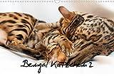 Bengal Kätzchen 2 (Wandkalender 2022 DIN A3 quer)