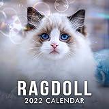 Ragdoll 2022 Calendar: Cute Cat - Cat Lover Gift