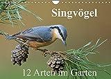 Singvögel - 12 Arten im Garten (Wandkalender 2022 DIN A4 quer)