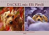 DACKELmix Elli Pirelli (Tischkalender 2022 DIN A5 quer)