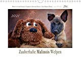 Zauberhafte Malinos Welpen - Belgische Schäferhunde (Wandkalender 2021 DIN A4 quer)