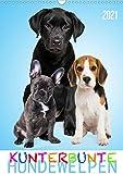 Kunterbunte Hundewelpen (Wandkalender 2021 DIN A3 hoch)