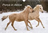 Ponys in Aktion (Wandkalender 2021 DIN A4 quer)