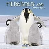 Tierkinder 2021: Broschürenkalender mit Ferienterminen. Babys von Tieren in süßen Bildern. 30 x 30 cm