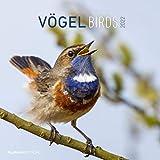 Vögel 2022 - Broschürenkalender 30x30 cm (30x60 geöffnet) - Kalender mit Platz für Notizen - Birds - Bildkalender - Wandkalender - Vogelkalender