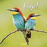 Vögel 2022: Broschürenkalender mit Ferienterminen und Bildern unserer heimischen Vogelwelt. Format: 30 x 30 cm