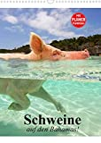 Schweine auf den Bahamas! (Wandkalender 2022 DIN A3 hoch)