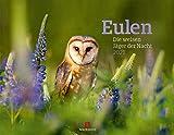 Eulen - weise Jäger der Nacht Kalender 2021, Wandkalender im Querformat (54x42 cm) - Tierkalender / Vogelkalender: Die weisen Jäger der Nacht