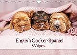 English Cocker Spaniel Welpen (Wandkalender 2022 DIN A4 quer)