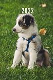 2022: Taschenkalender und Organizer für 2022 zum Planen und Organisieren von Terminen mit lustigem Hund Hunde - Wochenplaner von Januar bis ... Quartalsübersicht, Geburtstagsplan & Ferien