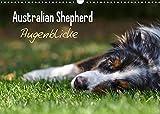Australian Shepherd - Augenblicke (Wandkalender 2022 DIN A3 quer)