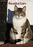 Hauskatzen (Wandkalender 2022 DIN A4 hoch)
