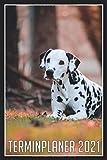 Terminplaner 2021: Jahresplaner von Oktober 2020 bis März 2022 mit Hund - Planer mit 120 Seiten in weiß im Format A5 mit glänzendem Soft Cover.