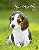 Hundekinder Posterkalender von Monika Wegler - niedlicher Wandkalender 2021 mit vielen Fotos und lustigen Mini-Geschichten - mit Monatskalendarium - Format 34 x 44 cm