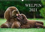 Welpen 2021 (Wandkalender 2021 DIN A3 quer)