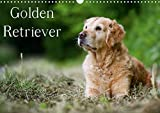 Golden Retriever (Wandkalender 2021 DIN A3 quer)