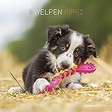 Welpen 2021 - Broschürenkalender 30x30 cm (30x60 geöffnet) - Puppies - Bild-Kalender - Wandplaner - mit Platz für Notizen - Alpha Edition
