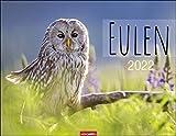 Eulen Kalender 2022 - Tierkalender - Wandkalender mit internationalem Monatskalendarium - 12 Farbfotos - 44 x 34 cm