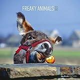 Freaky Animals 2022 - Broschürenkalender 30x30 cm (30x60 geöffnet) - Kalender mit Platz für Notizen - Bildkalender - Tierkalender - Wandkalender: Art & Image Broschürenkalender