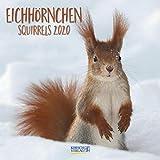 Eichhörnchen 2022: Broschürenkalender mit Ferienterminen. Format: 30 x 30 cm