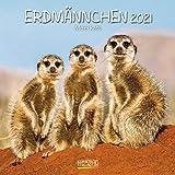 Erdmännchen 2021: Broschürenkalender mit Ferienterminen. Lustige Bilder der witzigen kleinen Tiere. 30 x 30 cm