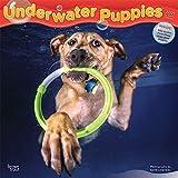 Underwater Puppies – Welpen unter Wasser 2021 - 16-Monatskalender: Original BrownTrout-Kalender [Mehrsprachig] [Kalender] (Wall-Kalender)