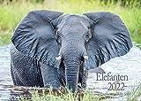 Edition Seidel Elefanten Premium Kalender 2022 DIN A3 Wandkalender Tiere Afrika