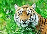 Edition Seidel Tiger Premium Kalender 2022 DIN A3 Wandkalender Tiere Natur Raubkatze