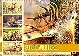 Scheue Wildtiere in heimischen Wäldern und Bergen (Wandkalender 2021 DIN A3 quer)