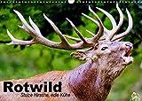 Rotwild. Edle Hirsche, stolze Kühe (Wandkalender 2022 DIN A3 quer): Die mächtigsten und größten Wildtiere unserer Wälder (Monatskalender, 14 Seiten ) (CALVENDO Tiere)
