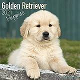 Golden Retriever Puppies 2021 Wall Calendar