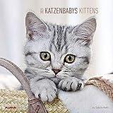 Katzenbabys 2021 - Broschürenkalender 30x30 cm (30x60 geöffnet) - Kittens - Bild-Kalender - Wandplaner - mit Platz für Notizen - Alpha Edition: by Sabine Rath