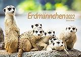 Edition Seidel Erdmännchen Premium Kalender 2022 DIN A3 Wandkalender Tiere Afrika