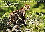 Freigänger - Hauskatzen unterwegs (Tischkalender 2022 DIN A5 quer)