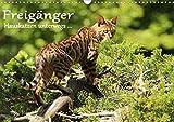 Freigänger - Hauskatzen unterwegs (Wandkalender 2021 DIN A3 quer)