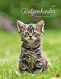 Katzenkinder Posterkalender von Monika Wegler - niedlicher Wandkalender 2021 mit vielen Fotos und lustigen Mini-Geschichten - mit Monatskalendarium - Format 34 x 44 cm