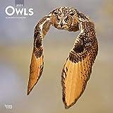 Owls - Eulen 2021 - 16-Monatskalender: Original BrownTrout-Kalender [Mehrsprachig] [Kalender] (Wall-Kalender)