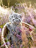 Katzen 2021 - Wand-Kalender - A&I - 48x64 - Tier-Kalender: Cats