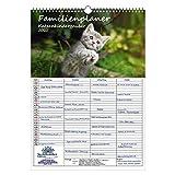 Familienplaner - Katzenkinderzauber DIN A3 Kalender für 2021 Katzenkinder Katzenbabys - Seelenzauber